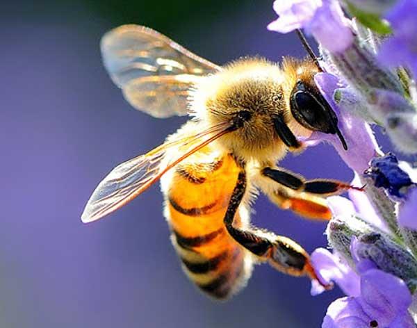 asportazione api torino